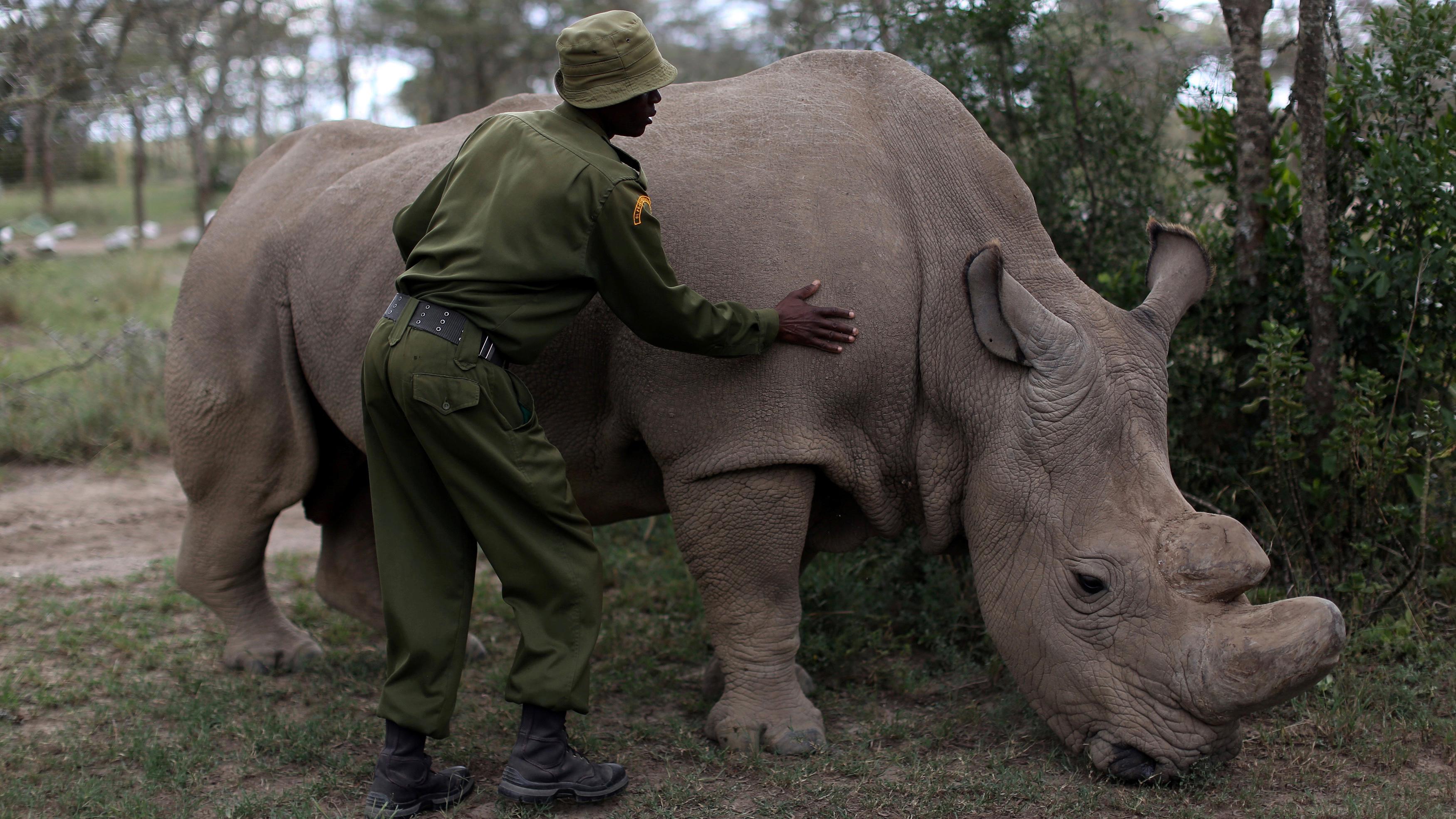 Rhino horn killings decrease as arrests of poachers increase in South Africa