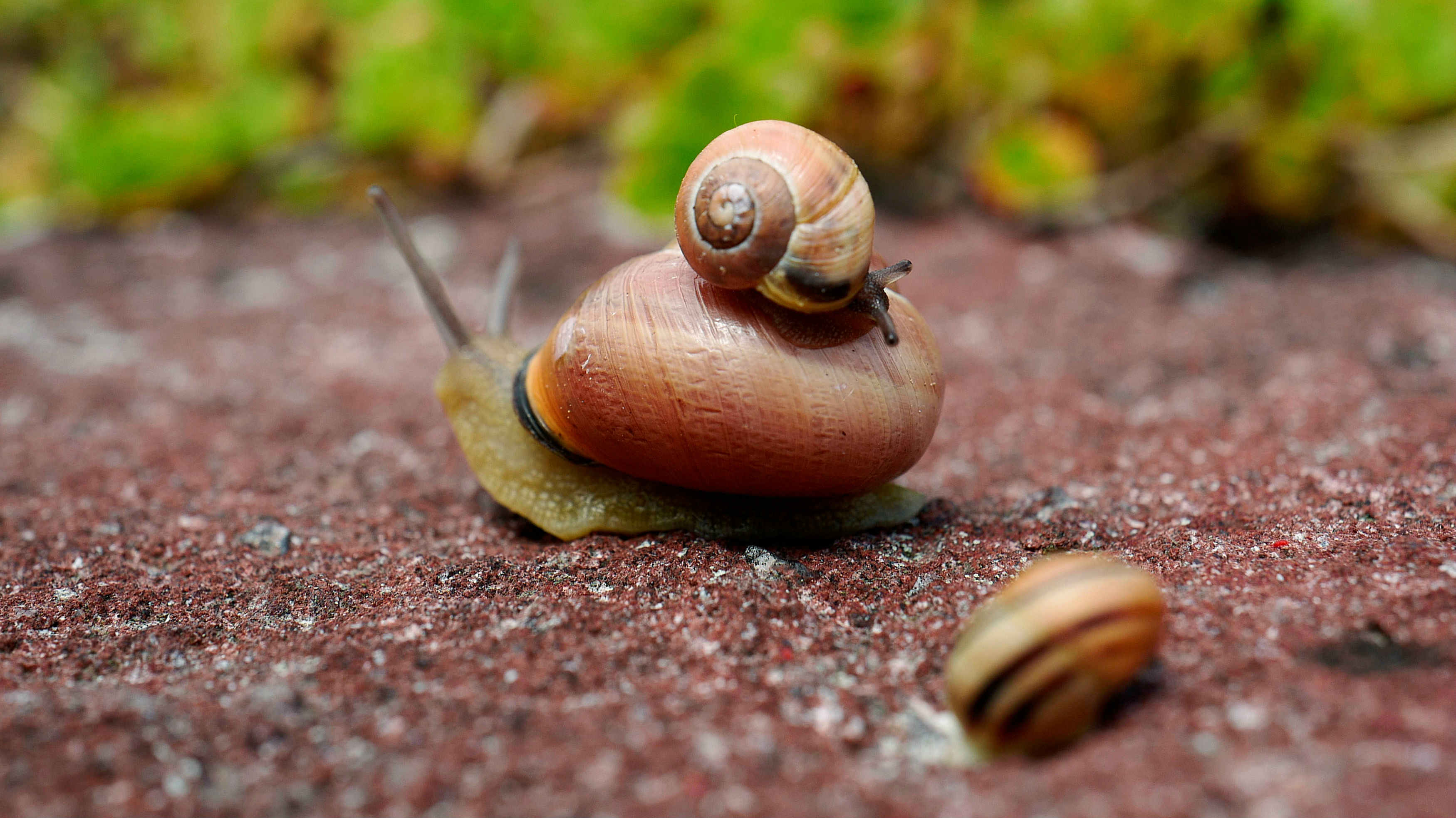 three snails on the ground, one sits on top of another.