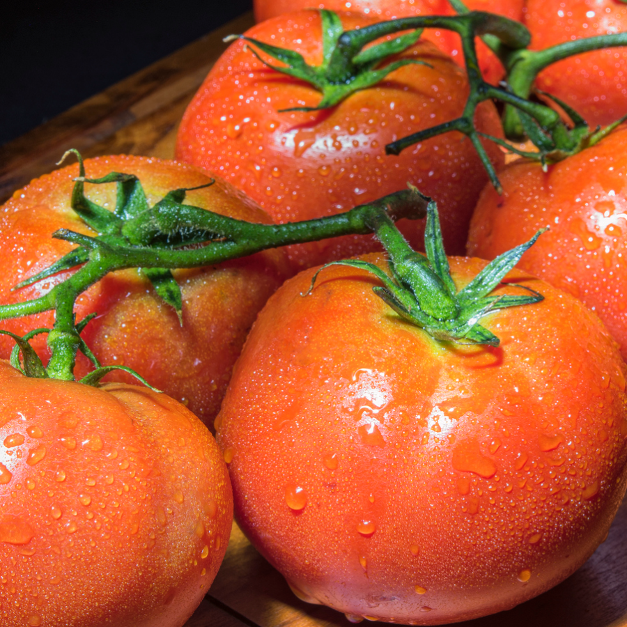 The Netherlands has basically reinvented the tomato — Quartz