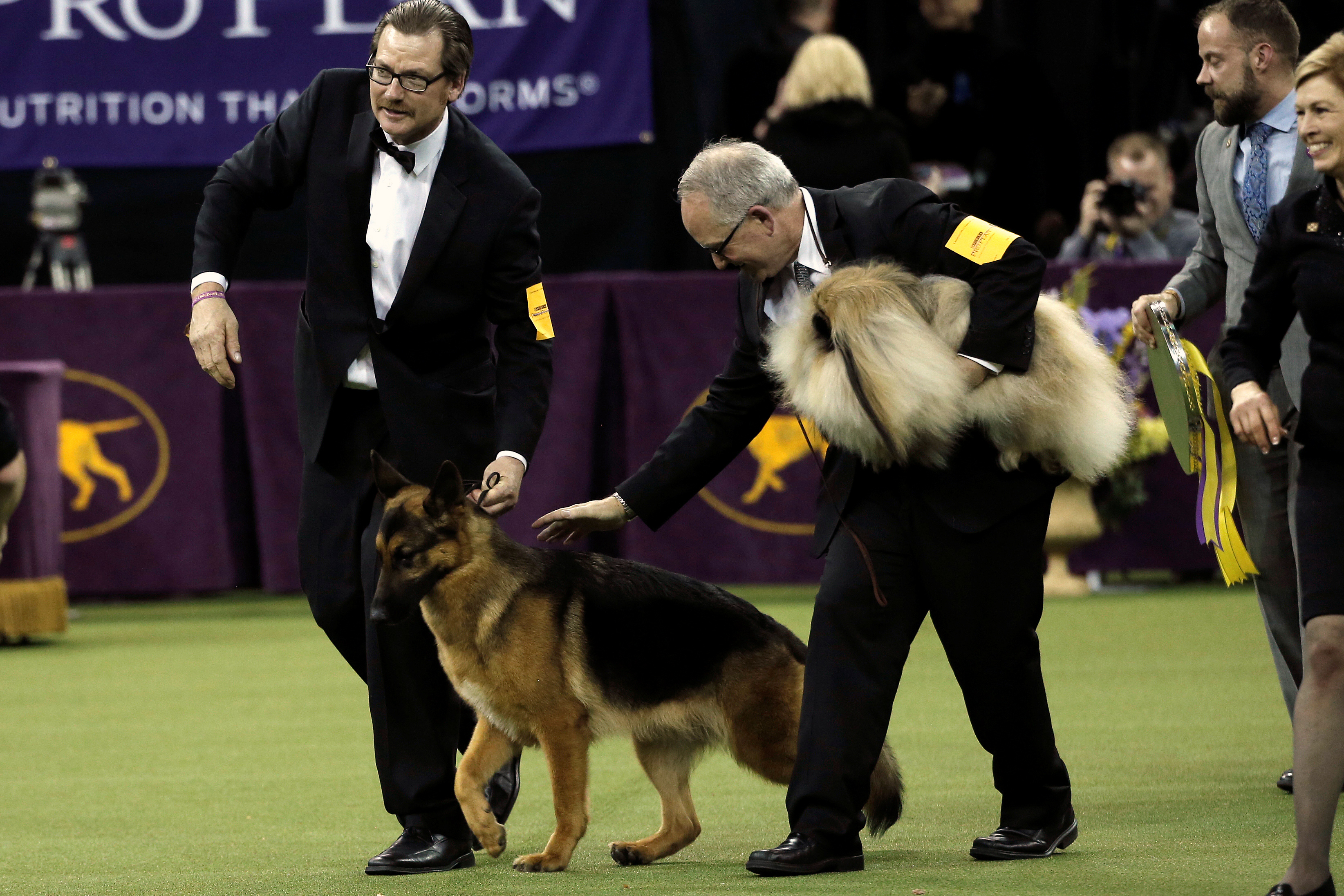 Rumor, a German shepherd, and his Handler Kent Boyles celebrate after winning Best In Show at the 141st Westminster Kennel Club Dog Show during the final judging at Madison Square Garden on Feb. 14.