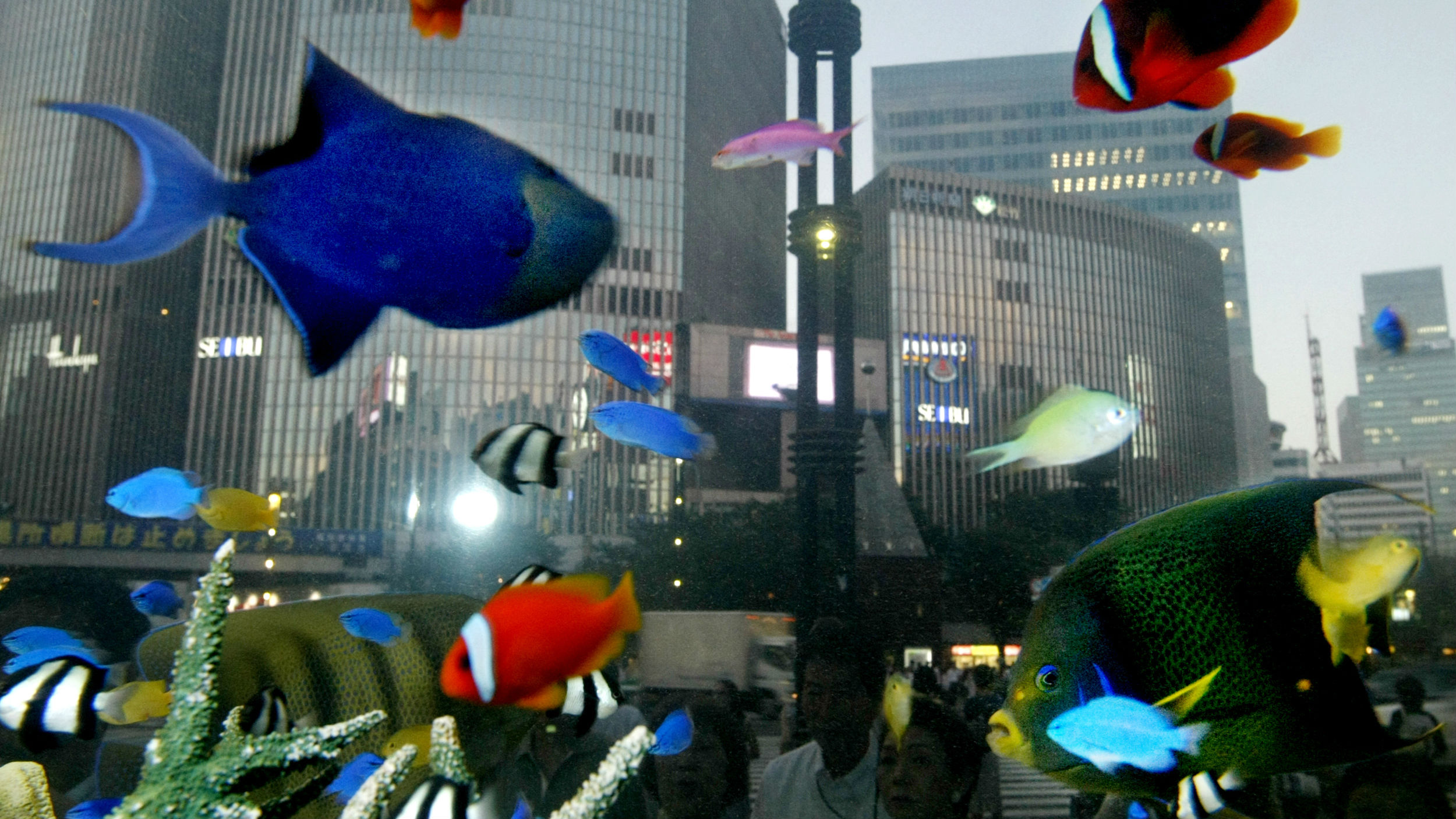 Tropical fish swim in an aquarium looking out onto a city.
