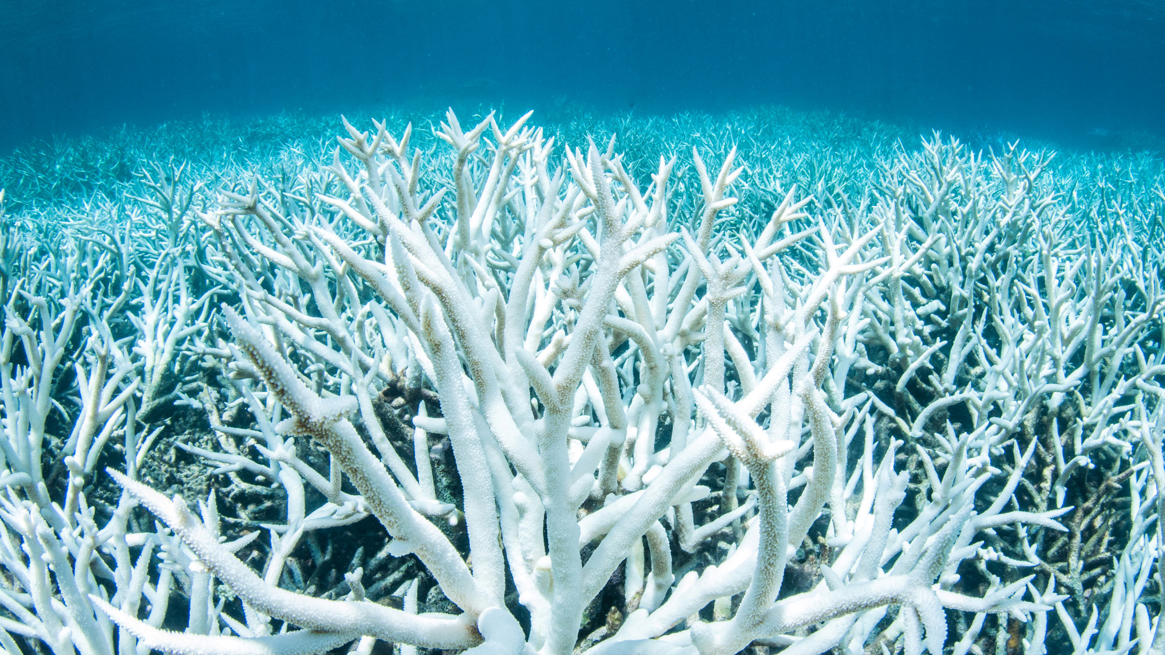 Bleached coral is photographed on Australia's Great Barrier Reef near Port Douglas, February 20, 2017 in this handout image from Greenpeace.         Greenpeace/Brett Monroe Garner/Handout