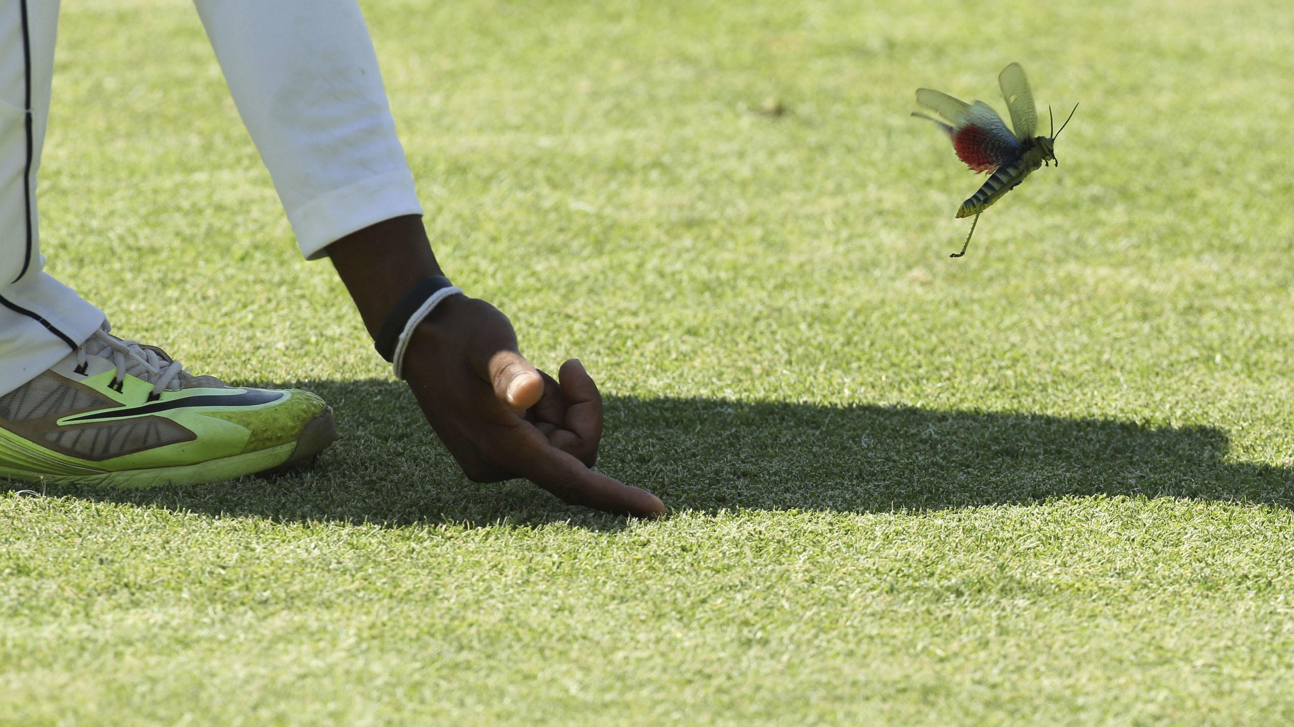 Sri Lanka player Dilrwuan Perera prompts a flying insect off the pitch during the test cricket match against Zimbabwe at Harare Sports Club in Harare, Monday Oct. 31, 2016. Zimbabwe is playing its 100th test cricket match as it plays host to Sri Lanka in Zimbabwe. (AP Photo/Tsvangirayi Mukwazhi)