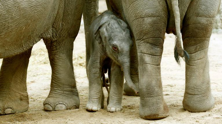 The Elephant Was Scared Of The Mouse He Ran To Hide By A Tree Little Laughed His Socks Off It Such Sight See