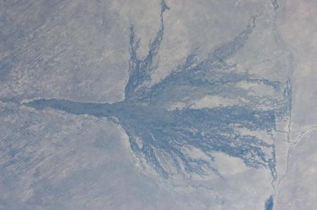 A view of the Okavango swamp from the International Space Station in 2011, surrounded by desert.