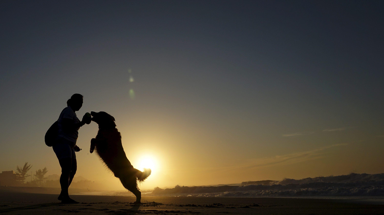 A Golden Retriever jumps to take a ball from a woman on Recreio dos Bandeirantes beach in Rio de Janeiro, Brazil, August 30, 2015.