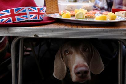 Dogs can be deceive humans a study shows