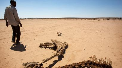 A man walks past the carcass of a domestic animal that died due to severe drought in Baligubadle village near Hargeisa, the capital city of Somaliland, in this handout picture provided by The International Federation of Red Cross and Red Crescent Societies on March 15, 2017.