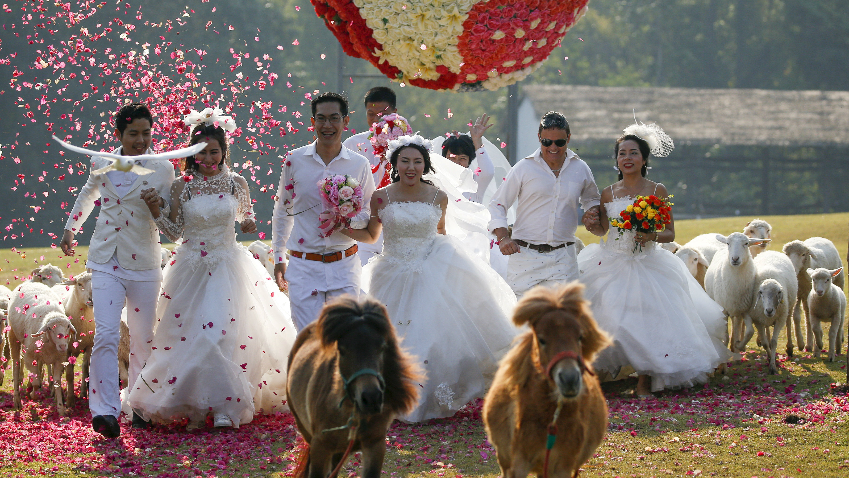 (From L-R) Kittinant Suwansiri and Jintara Promchat, Kasemsak Jiranantiporn and Duangruethai Amnuayweroj, and David Leslie Chesterman and Charunee Koydun run among animals during a wedding ceremony ahead of Valentine's Day at a resort in Ratchaburi province, Thailand, February 13, 2016. Four Thai couples took part in the wedding ceremony arranged by the resort. REUTERS/Athit Perawongmetha