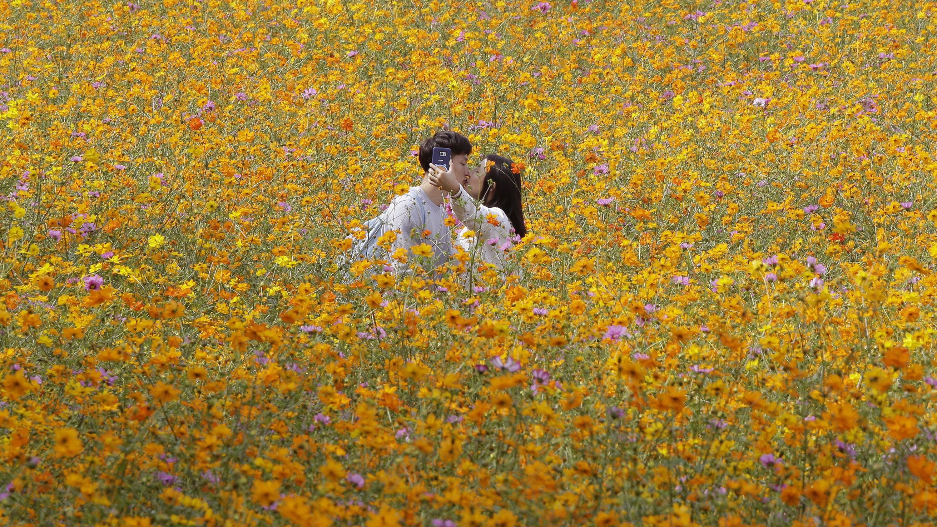A couple kisses as they make a selfie photo in a field of cosmos flowers at Olympic Park in Seoul, South Korea, Wednesday, Sept. 21, 2016.