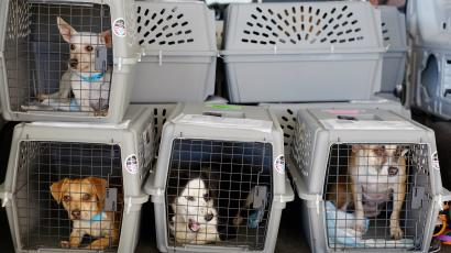 1d24abefaf These are the airlines on which your pet is least likely to die