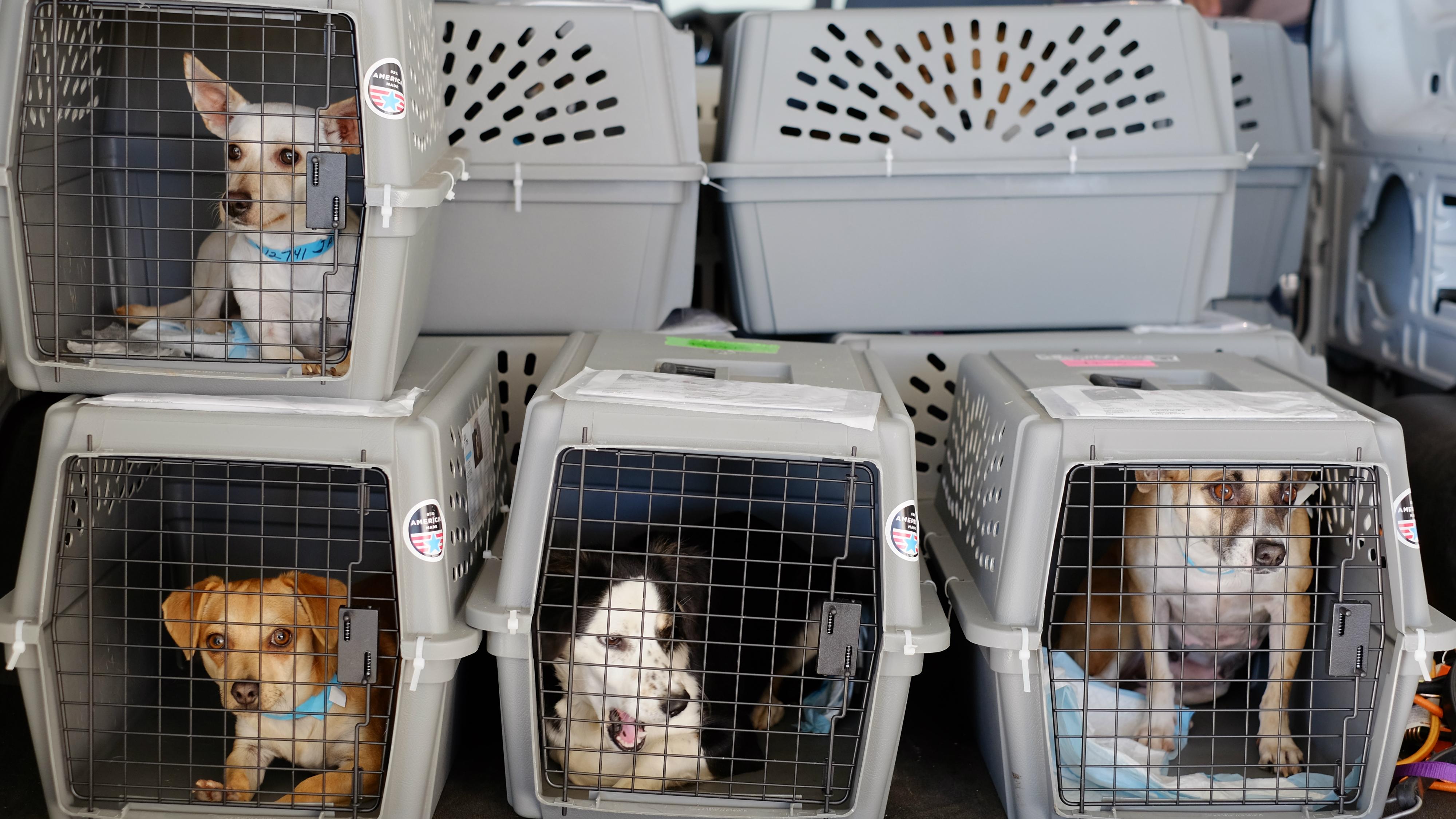 What Airlines Are Safest For Pets Quartz