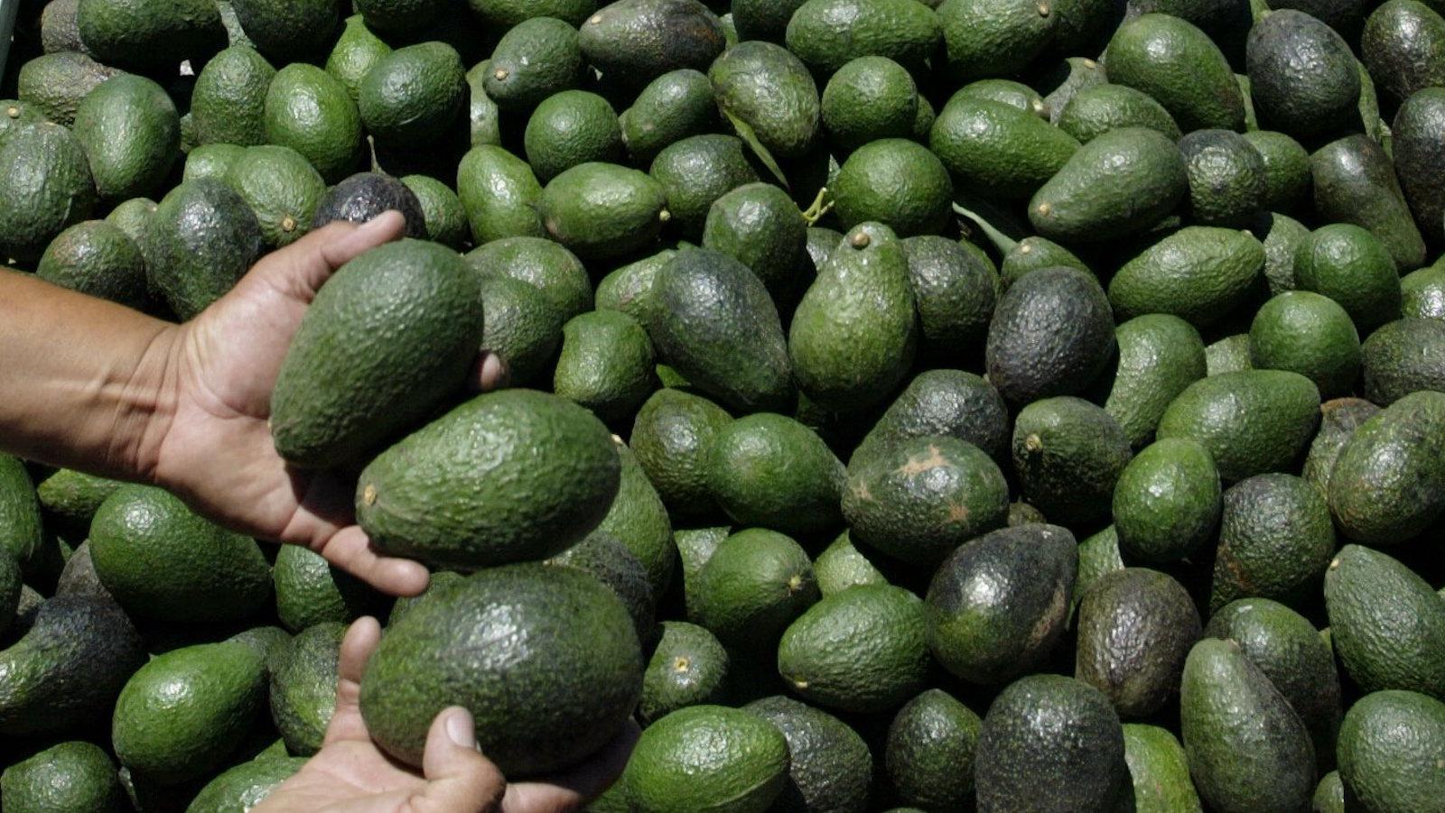 man holding avocados