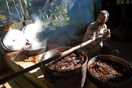 The first scientific studies of ayahuasca's health effects