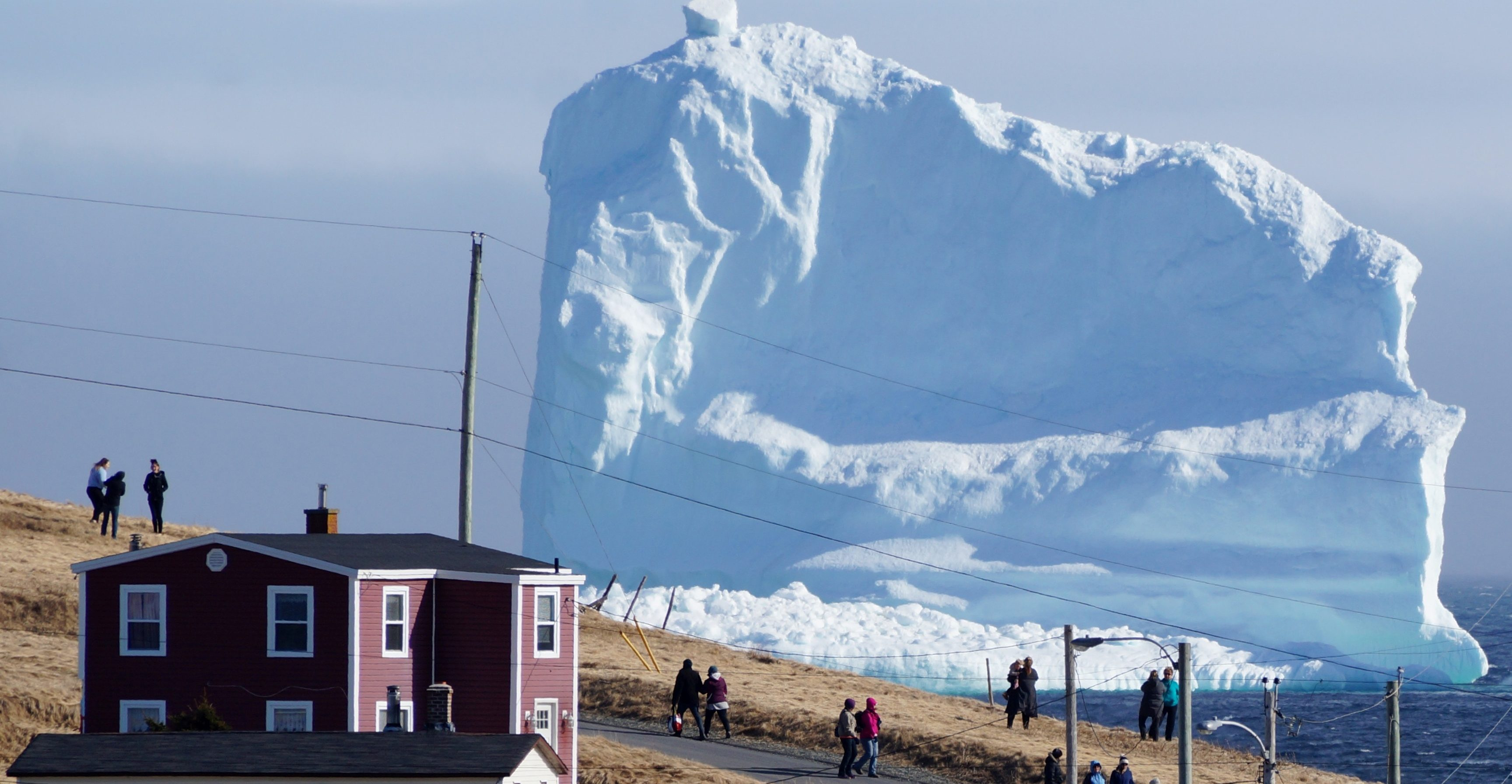Ferryland Icebergs