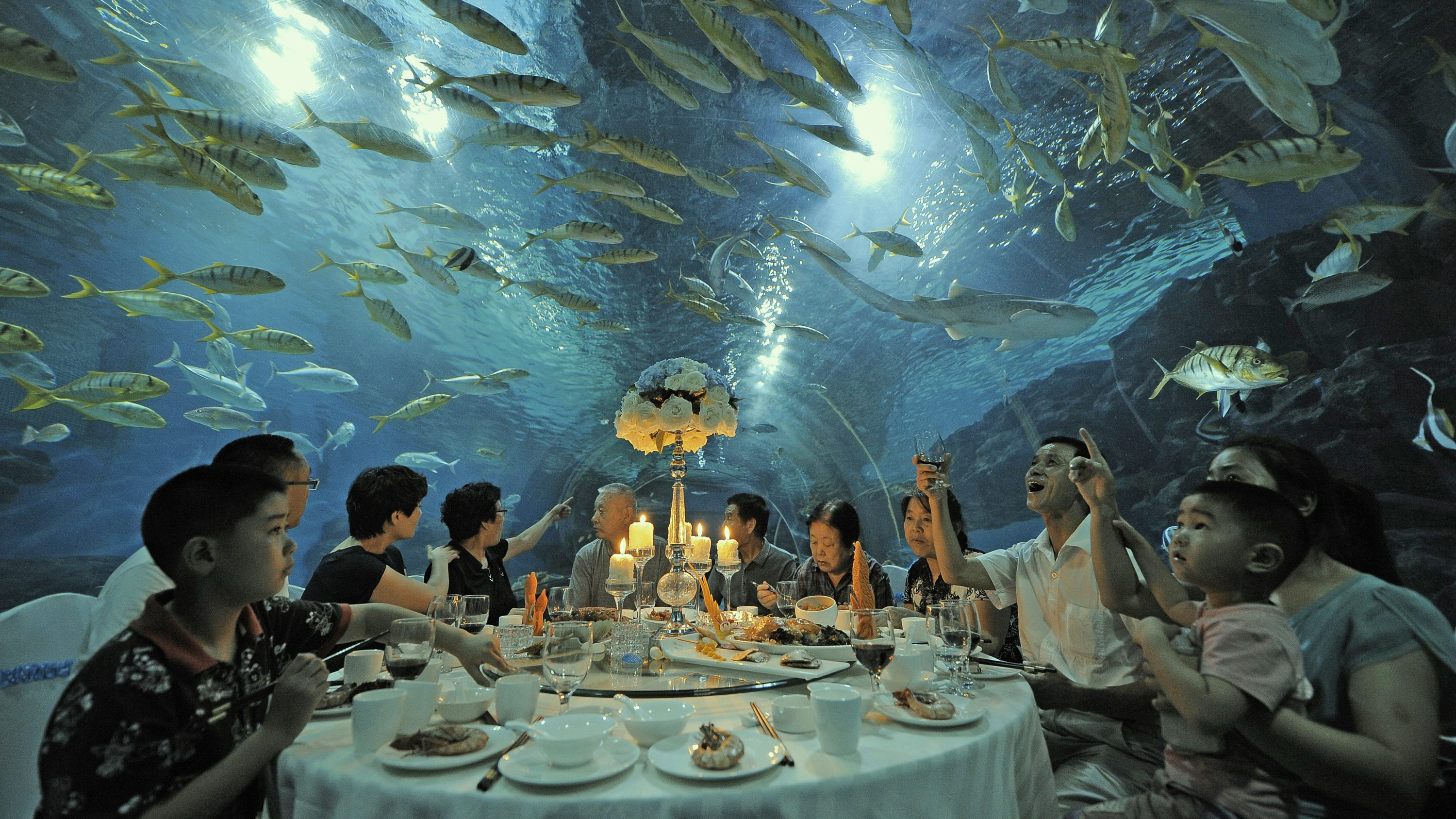 Tourists have dinner as fish swim around them, at the Tianjin Haichang Polar Ocean World in Tianjin, September 1, 2014. Picture taken September 1, 2014.