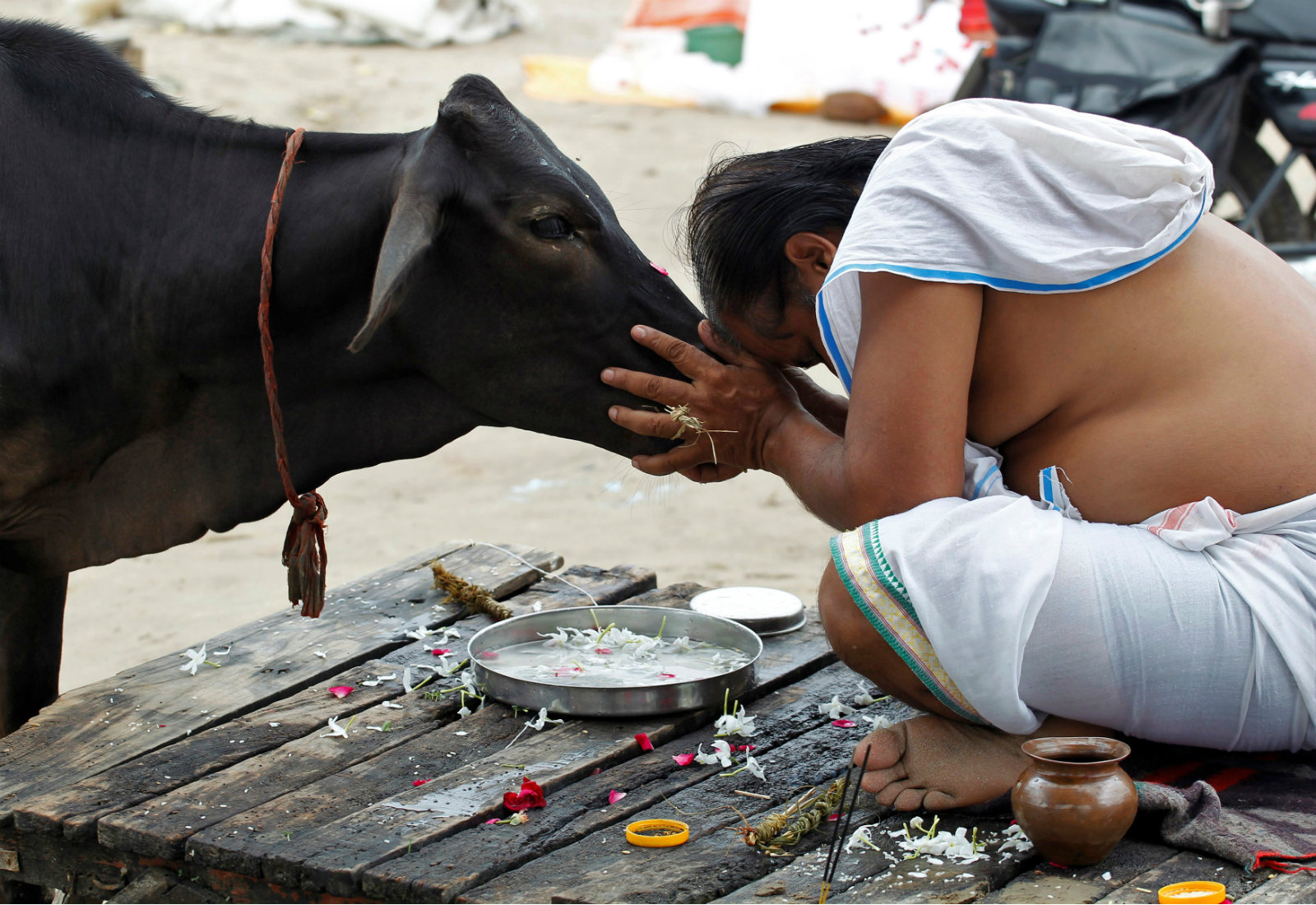 A devotee offers prayers to a cow after taking a holy dip in Allahabad, Uttar Pradesh.