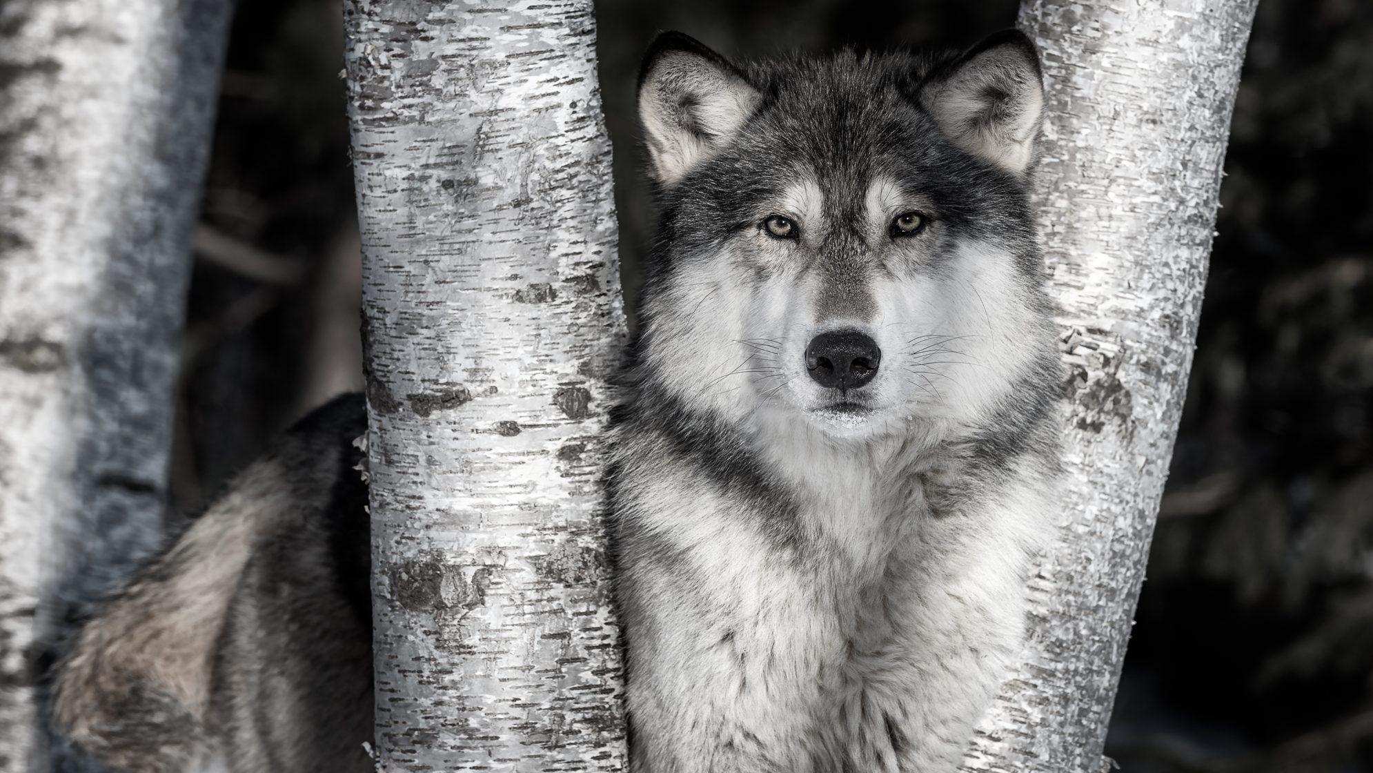 Best wildlife photography spots uk