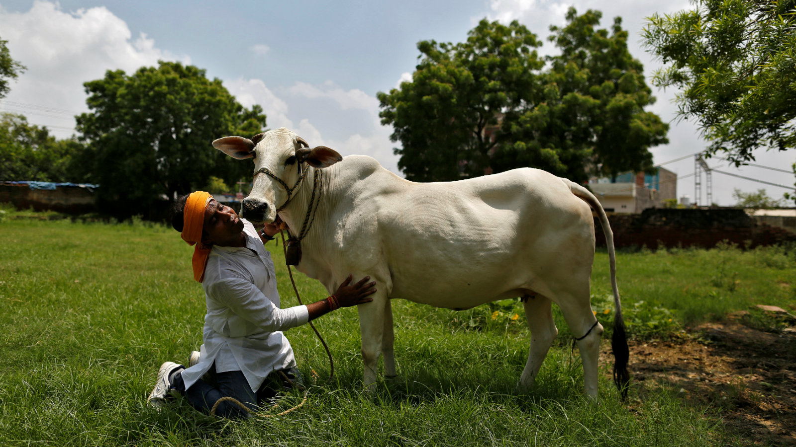 India-cow-protection-gau-rakshak