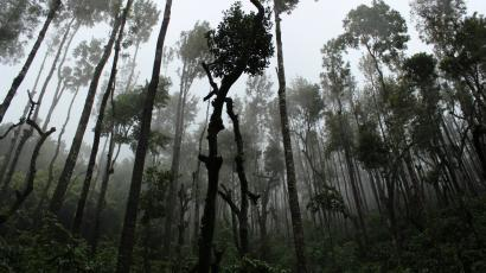 India-forest-Mowgli-girl