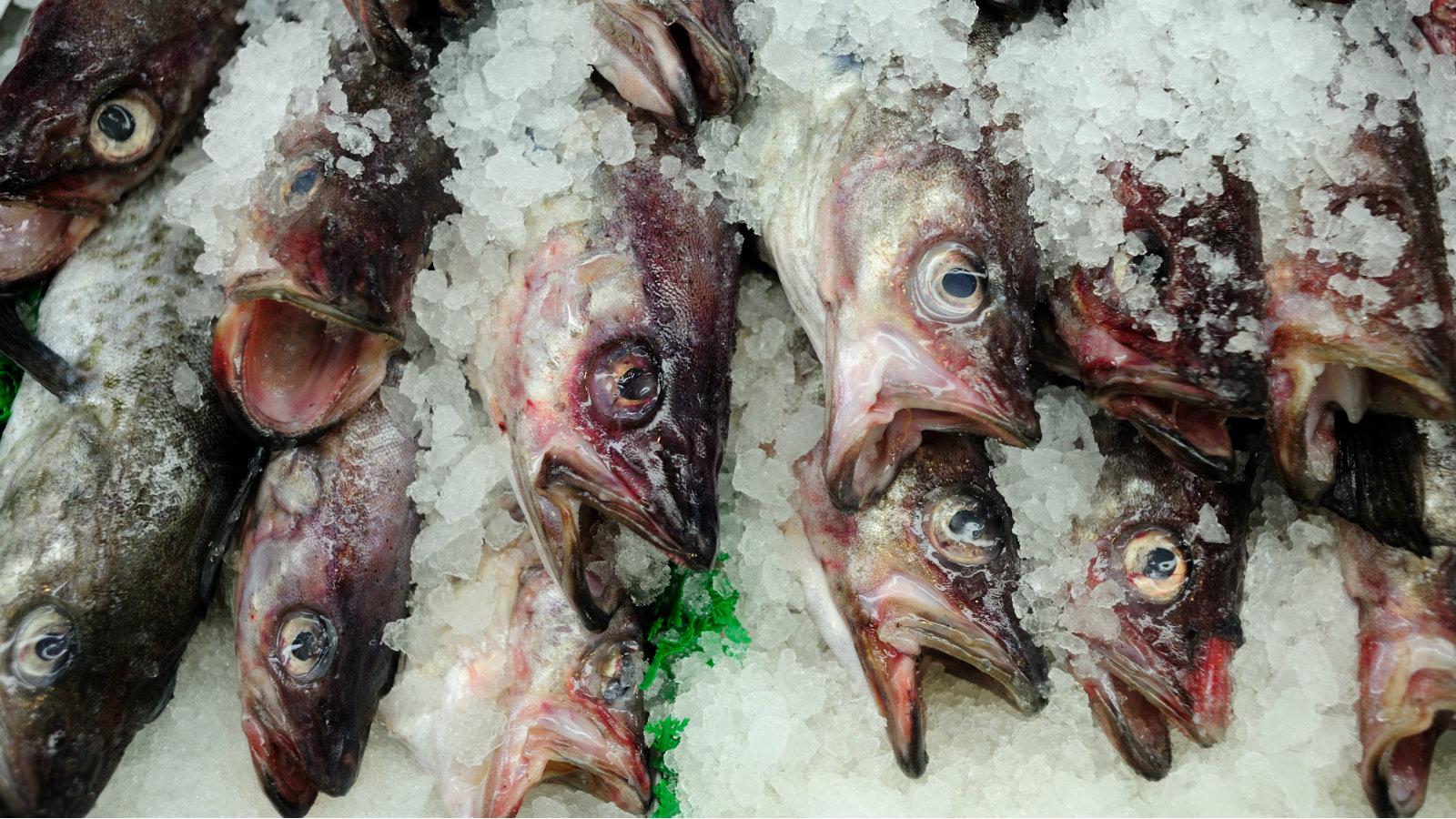 India-fish-consumption-Mintel
