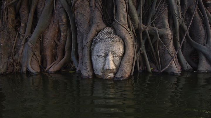 Roots in water with a Buddha head.Roots in water with a Buddha head.