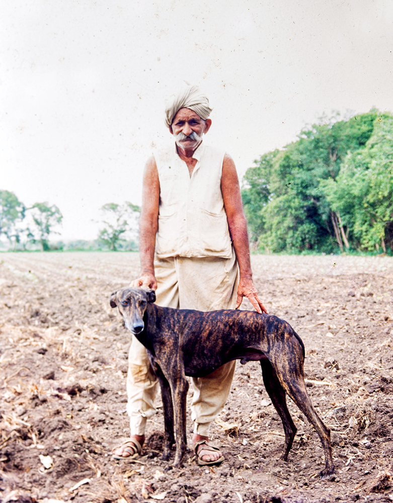 The Indian dogs that are dying out because everyone wants a