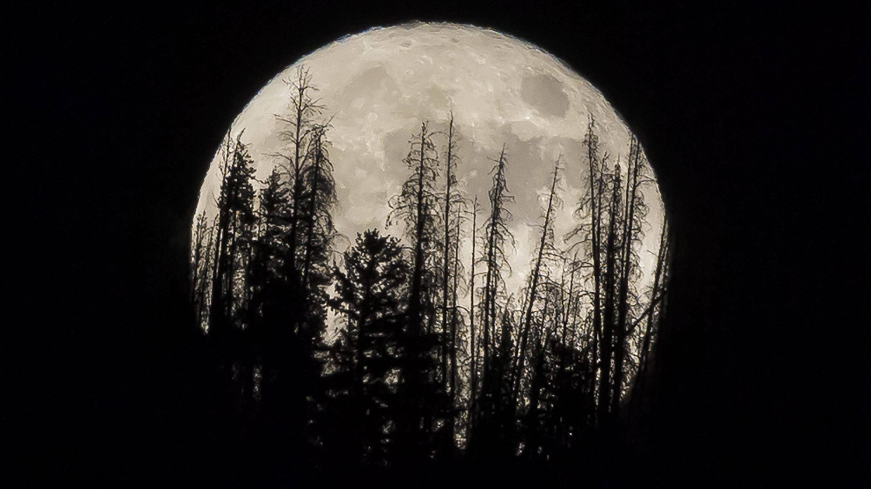 Evergreen trees are silhouetted on the mountain top as a supermoon rises over over the Dark Sky Community of  Summit Sky Ranch in Silverthorne, Colo., Monday, Nov. 14, 2016.