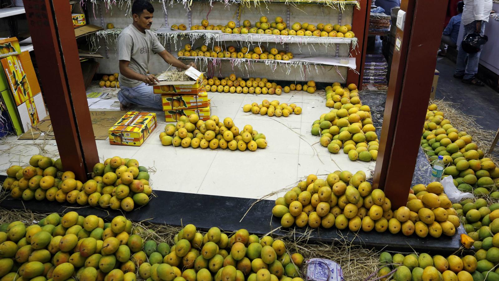 India-Mangoes-Sheherwali Jains