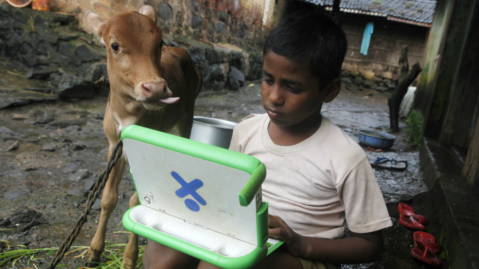 "Harish, 11, a school boy uses a laptop provided under the ""One Laptop Per Child' project by a non-governmental organisation (NGO) as a calf stands next to him, on the eve of International Literacy Day at Khairat village, about 90 km (56 miles) from Mumbai September 7, 2010. International Literacy Day is celebrated each year on September 8."