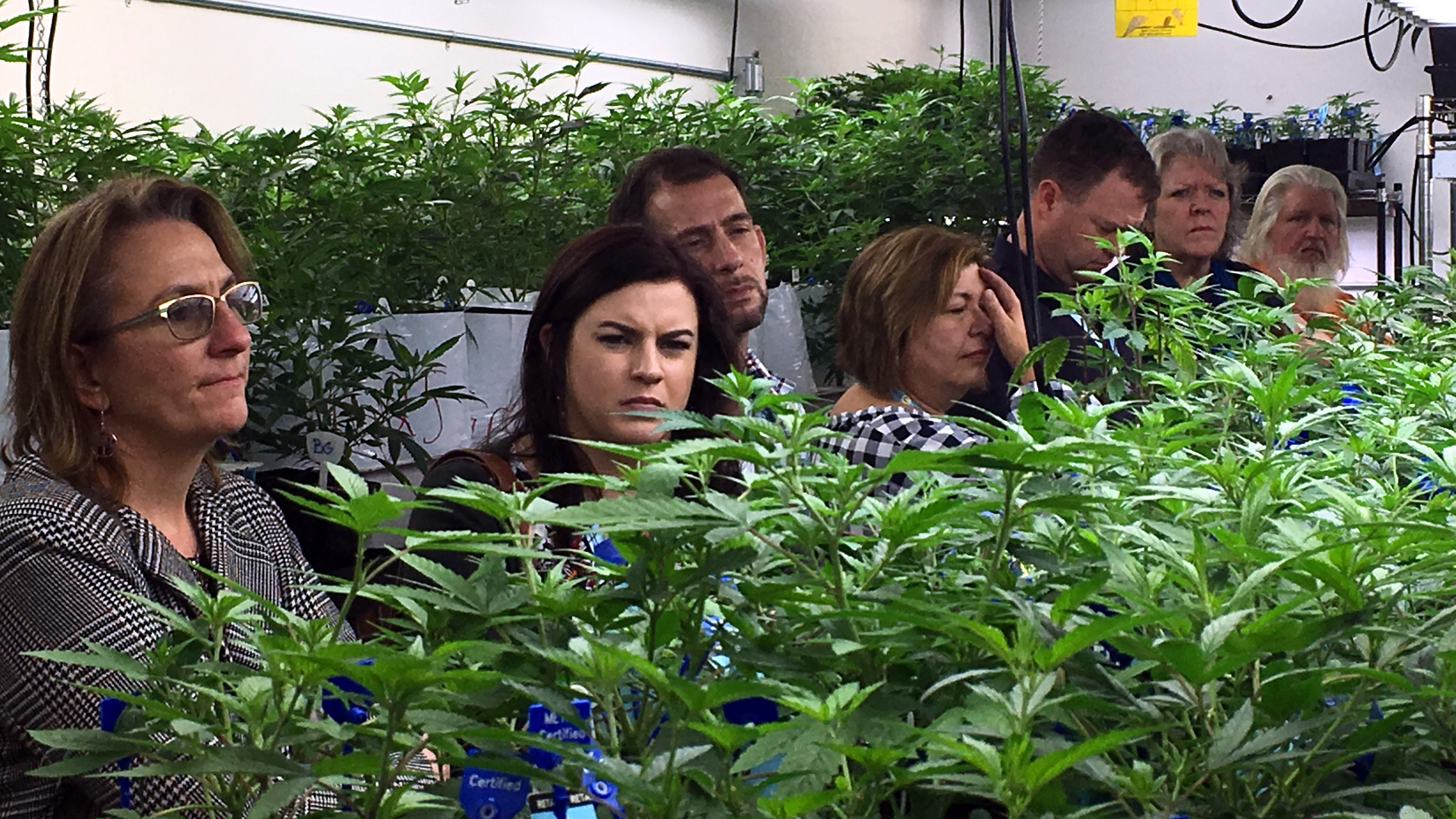 In this Jan. 31, 2017 photo, agriculture regulators from seven different states and Guam tour a Denver marijuana growing warehouse on a tour organized by the Colorado Department of Agriculture in Denver. The department is opening up its marijuana knowledge to other states and encouraging them to plan now for the possibility of regulating farmers growing a plant that violates federal law.