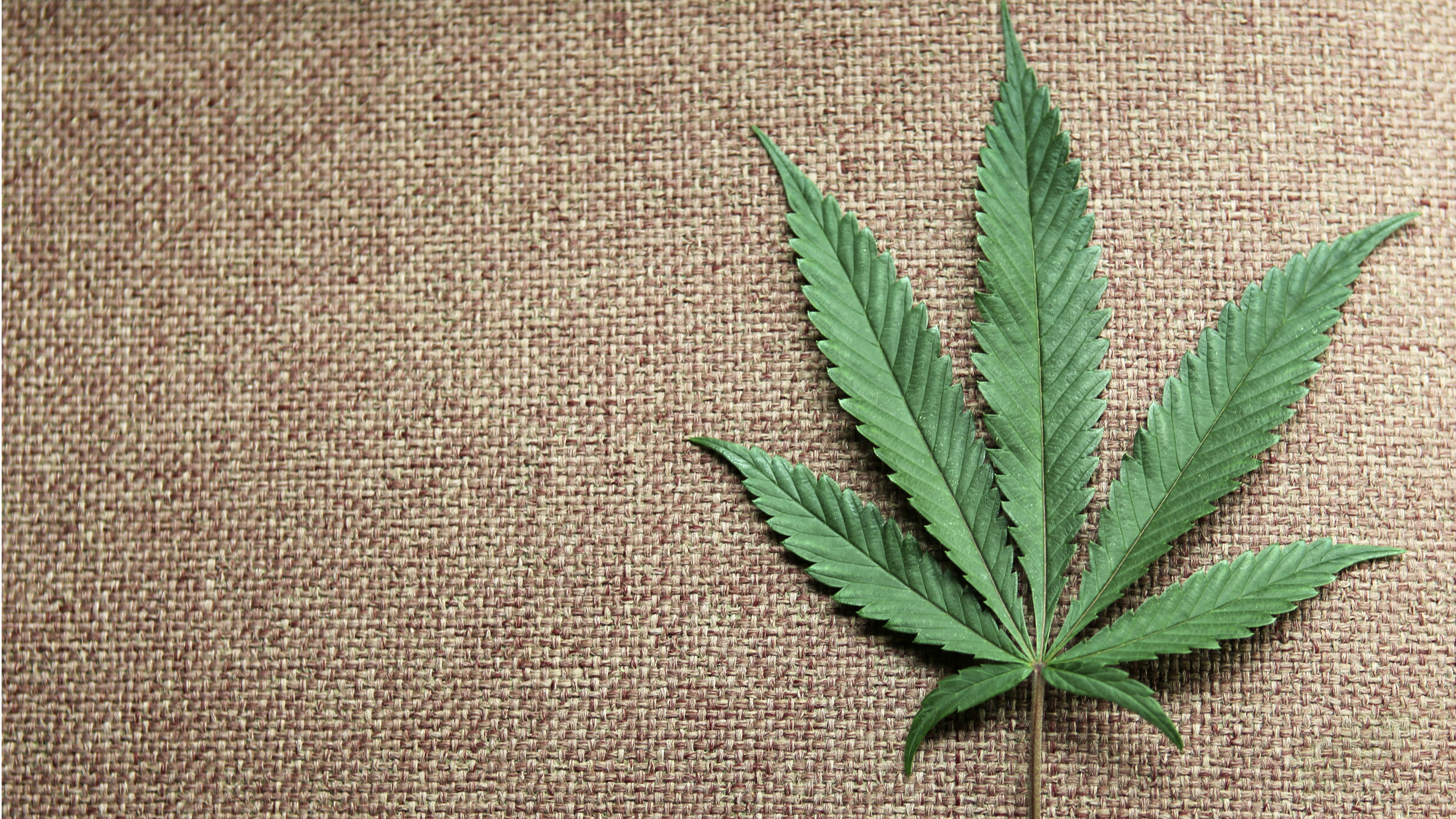A marijuana leaf is displayed at Canna Pi medical marijuana dispensary in Seattle, Washington, November 27, 2012. Washington State's Initiative 502, that was approved by voters in the November 6, 2012 general election, legalizes marijuana in Washington State effective December 6, 2012. Marijuana remains illegal at the Federal level. Picture taken November 27, 2012.