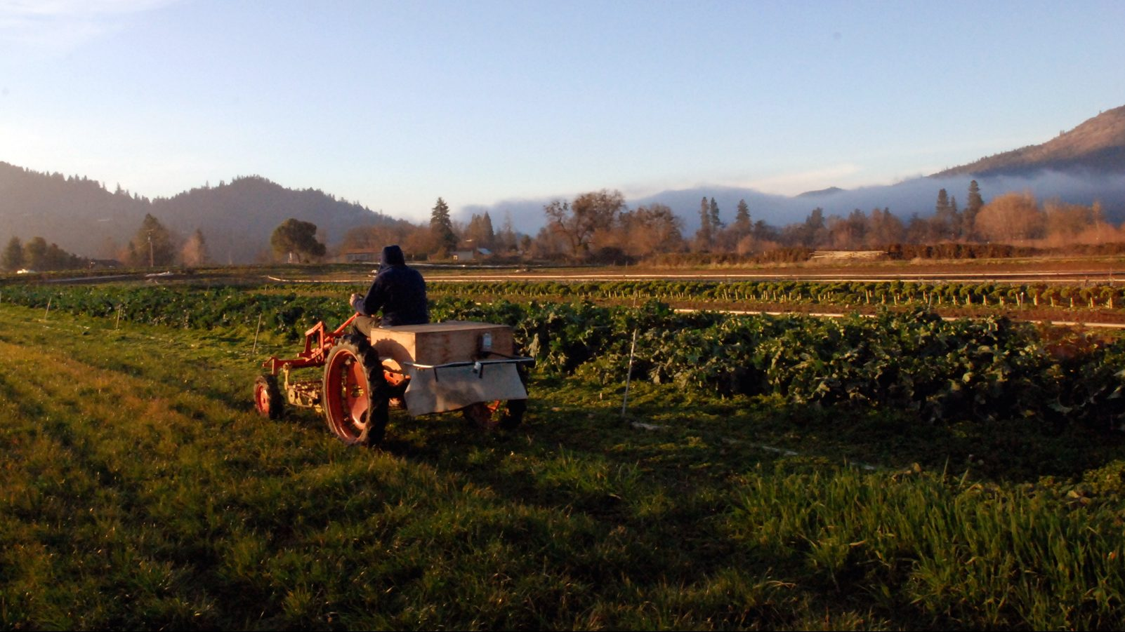 Chris Jagger drives back to the barn on his 1940s vintage Allis-Chalmers Model G tractor at his Blue Fox Farm near Applegate, Ore., on Nov. 30, 2009. Jagger plugs the tractor plugs in to the grid to recharge its batteries, but some farmers are putting solar panels in their fields to do the job.