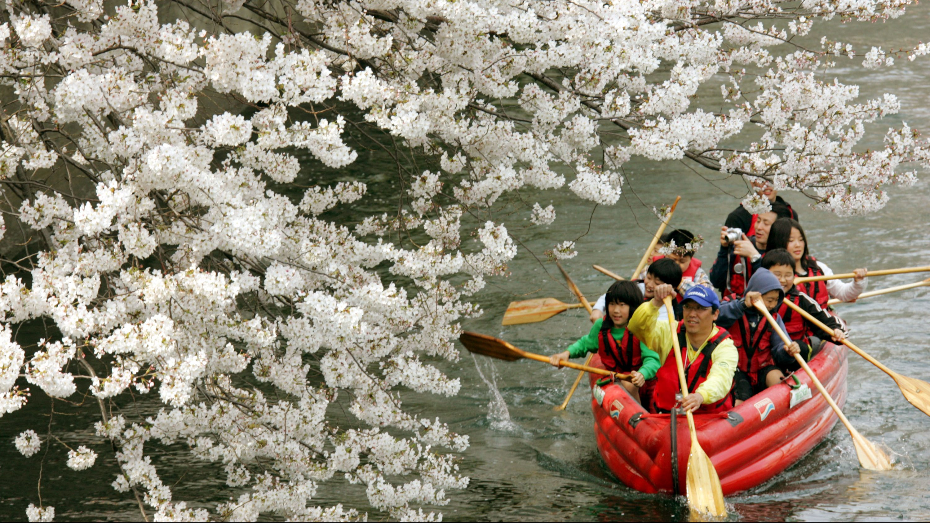 People enjoy cherry blossoms on the canoe in Yokohama, near Tokyo,  Sunday April 1, 2007. Tens of millions of people across the country are expected to take pleasure in viewing cherry blossoms around this time of the year.