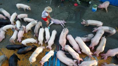 A man pulls away a pig's carcass at a flooded farm in Xiaogan, Hubei Province, China, July 22, 2016. Picture taken July 22, 2016. REUTERS/Darley Shen - RTSJARL