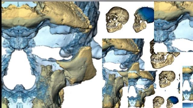 Homo sapiens paleoanthropology collage.
