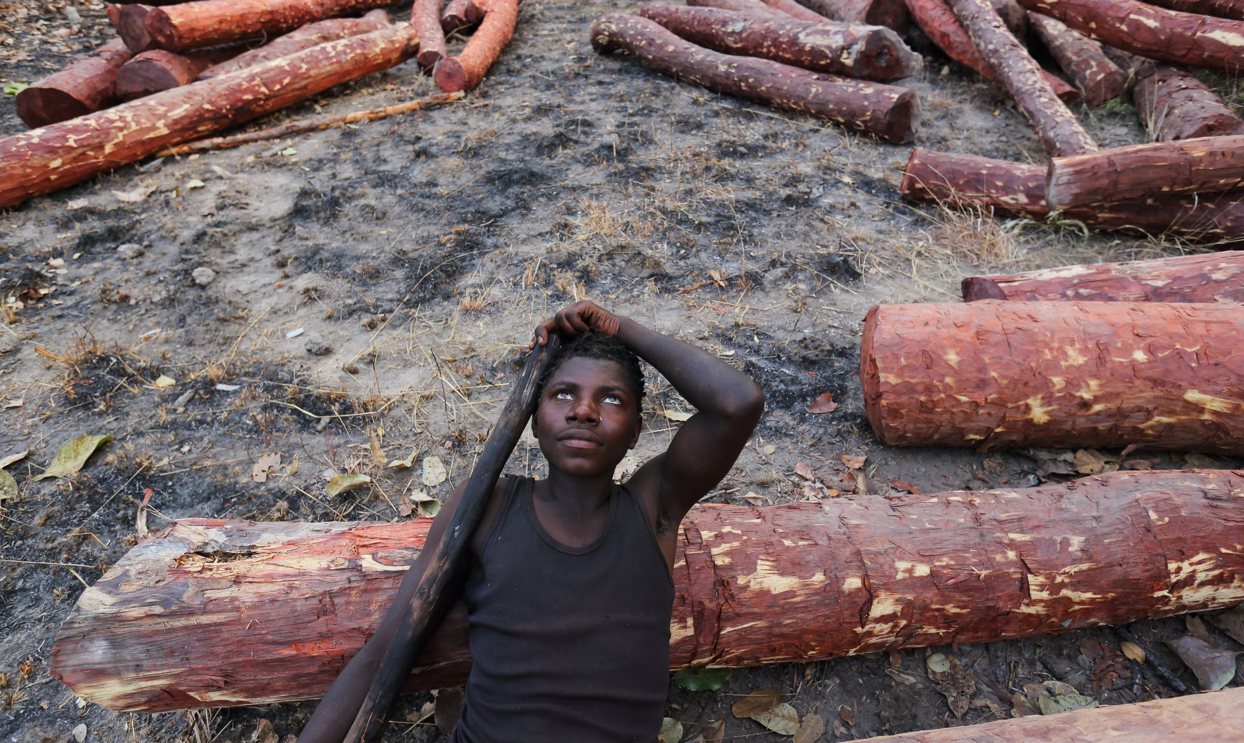 A logger in Katanga province in the Democratic Republic of Congo rests.