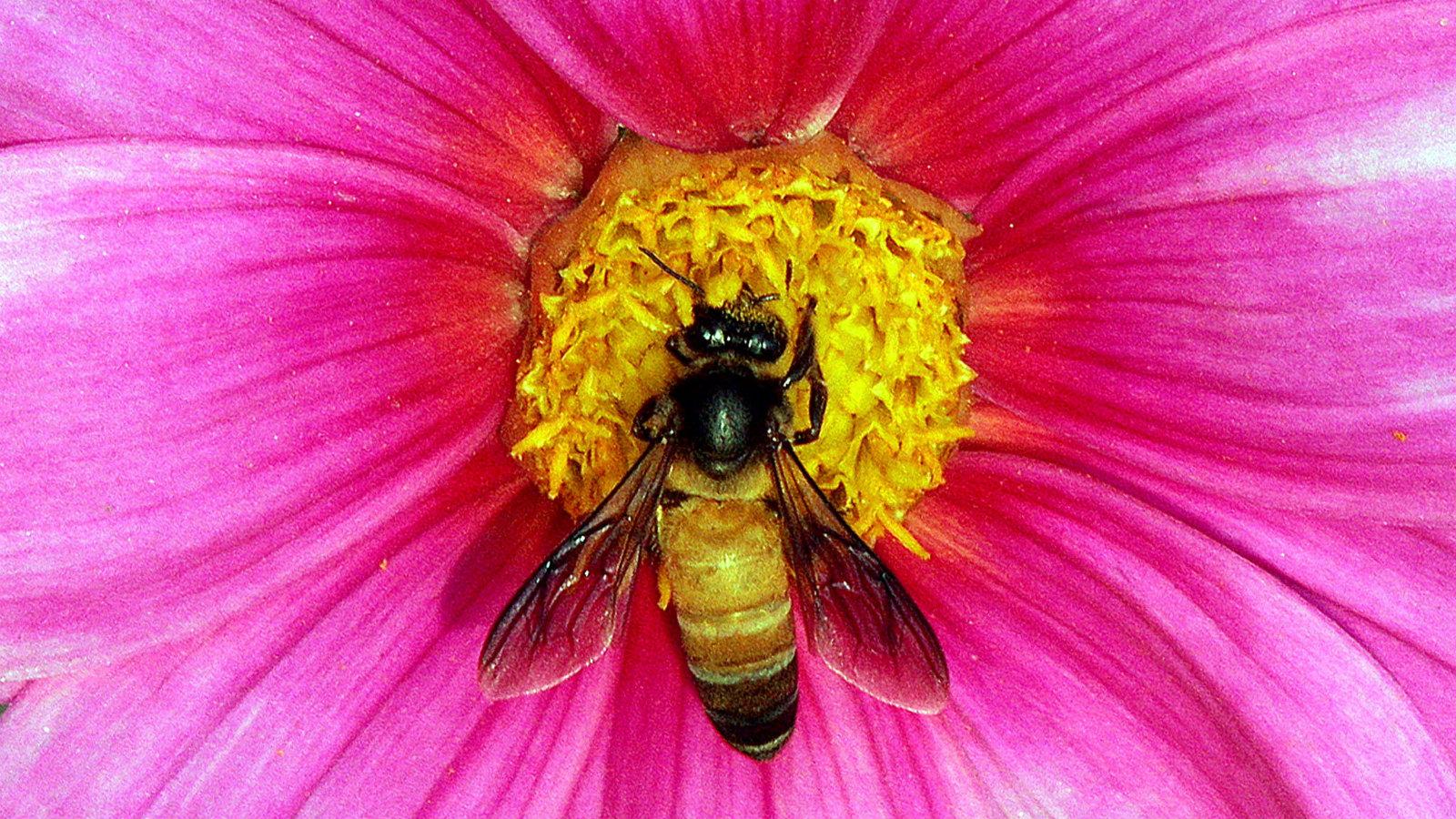 India-bees-biodiversity