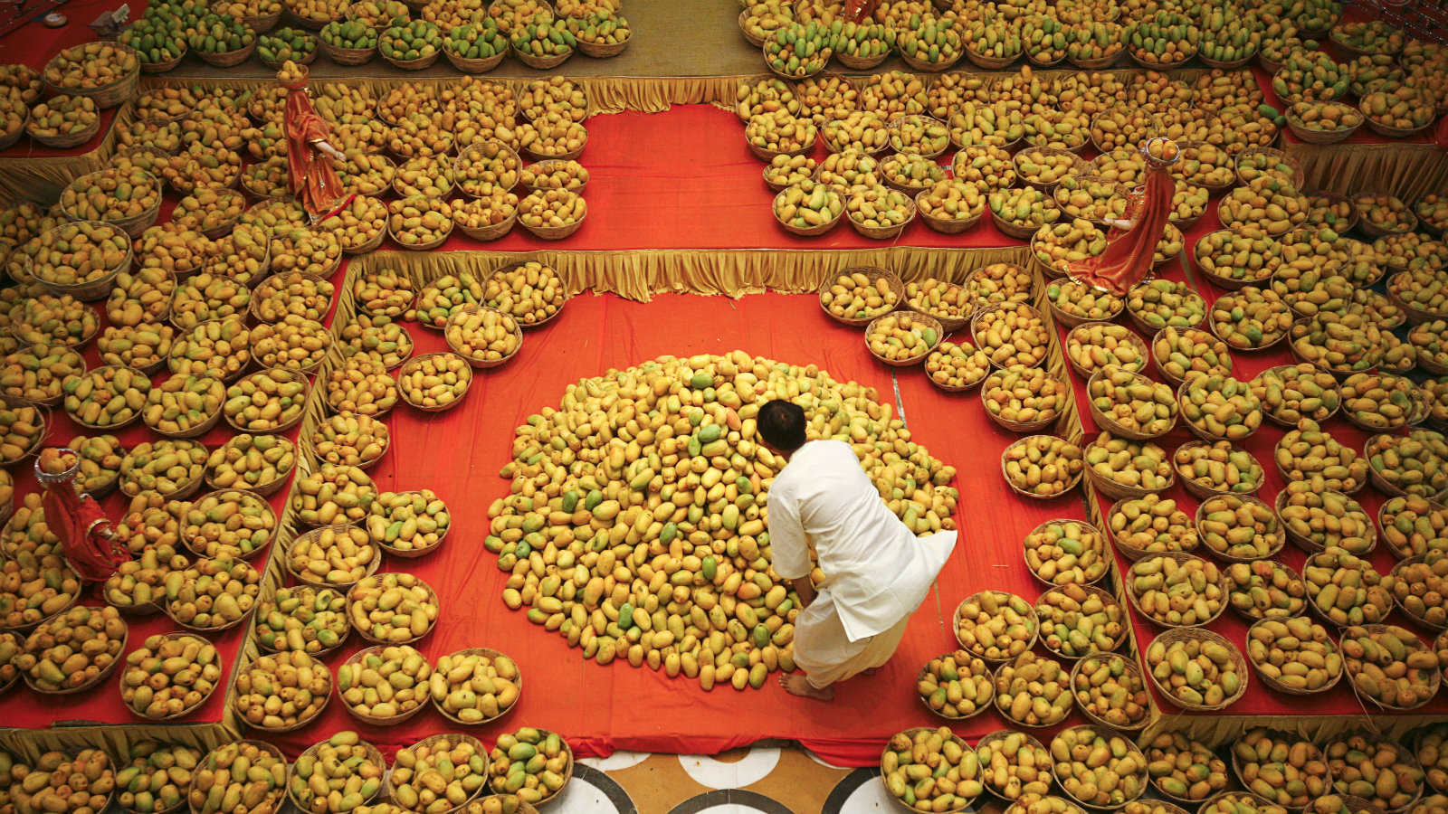 A Hindu priest arranges mangoes to be offered to Hindu God Lord Krishna inside a temple during a mango festival in the western Indian city of Ahmedabad June 9, 2013.