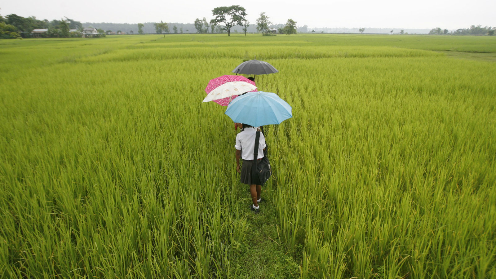 School children walk through a field at Koribari village on the outskirts of the northeastern Indian city of Siliguri August 25, 2008. Indian corn futures may trade range-bound on Monday with record exports and a lower acreage supporting and better-than-expected crop, aided by late rains, weighing, analysts said.