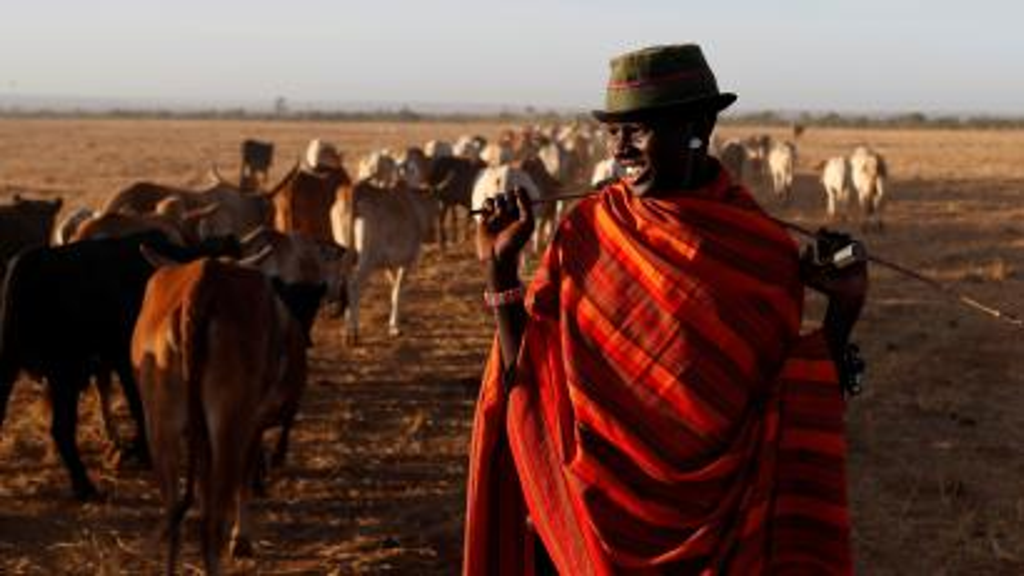 A Samburu tribesman stands behind cows as he enters the Mugui conservancy, Kenya February 11, 2017.