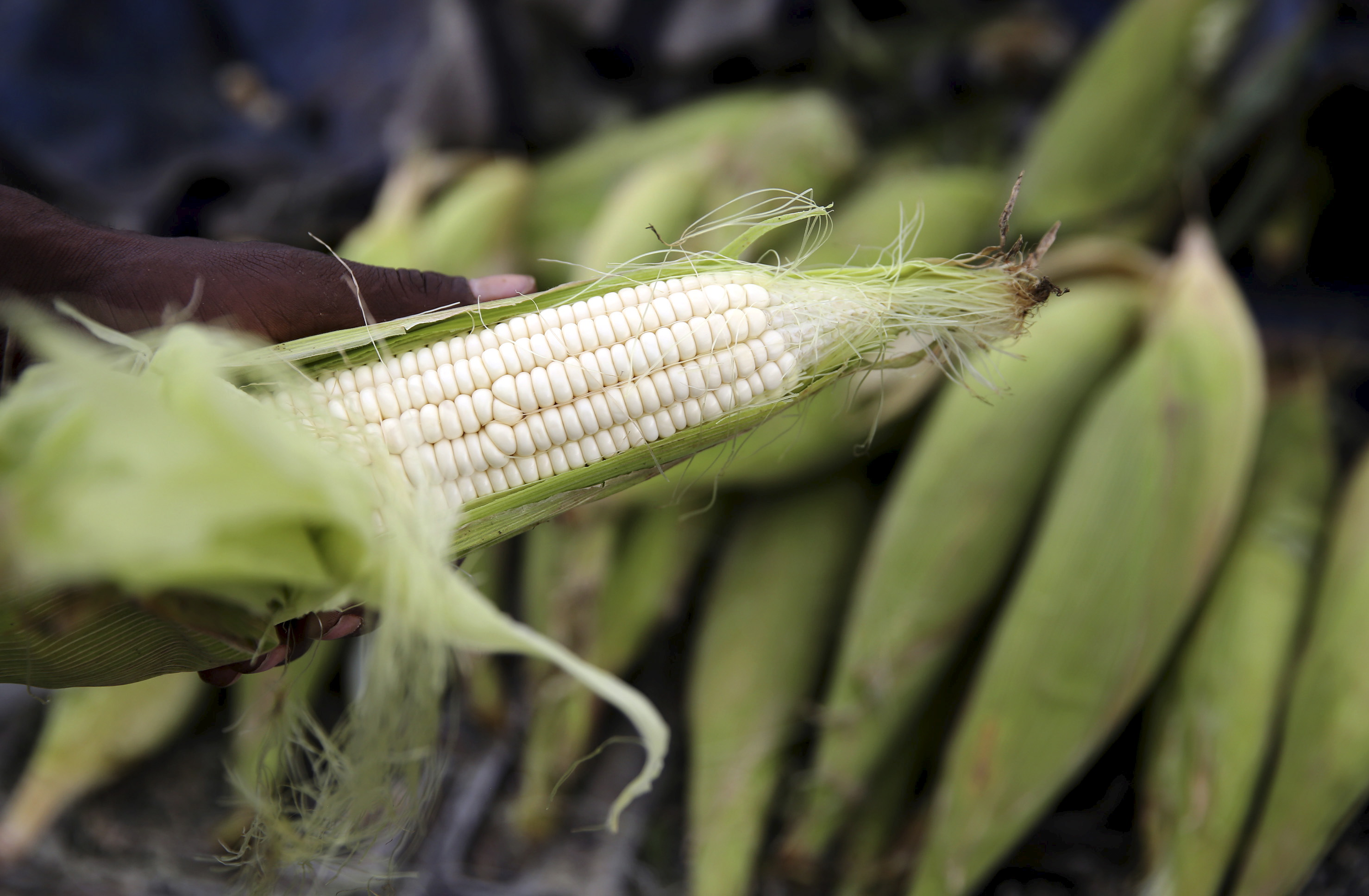 A hawker prepares a cob of corn at his makeshift shop in Soweto, January 27, 2016. South Africa will likely harvest 7.44 million tonnes of maize in 2016, 25 percent less than the 9.94 million tonnes reaped last year because of a scorching drought, a government agency said on Wednesday. REUTERS/Siphiwe Sibeko - RTX249L8