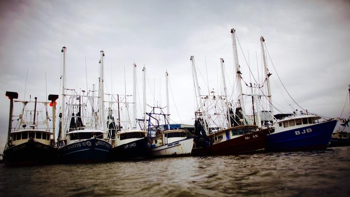 Docked shrimp boats in Venice, Louisiana