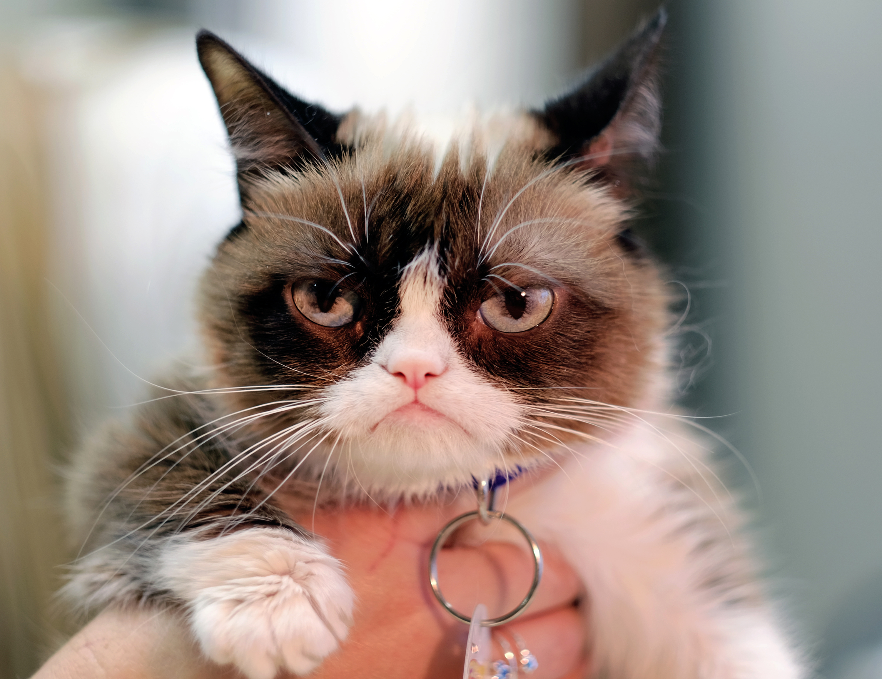 This Dec. 1, 2015 photo shows Grumpy Cat posing for a photo during an interview at the Associated Press in Los Angeles. Animals can melt the human heart, tickle the funny bone or bring us to tears. There is no end to the number of online animals - from YouTube to www.explore.org and all the social media sites in between. Nobody was busier than Grumpy Cat in 2015.