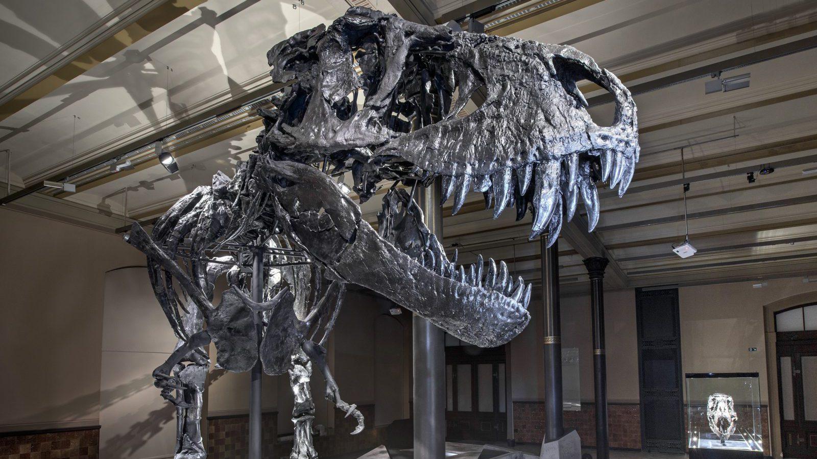 fast  tyrannosaurus rex run   quartz