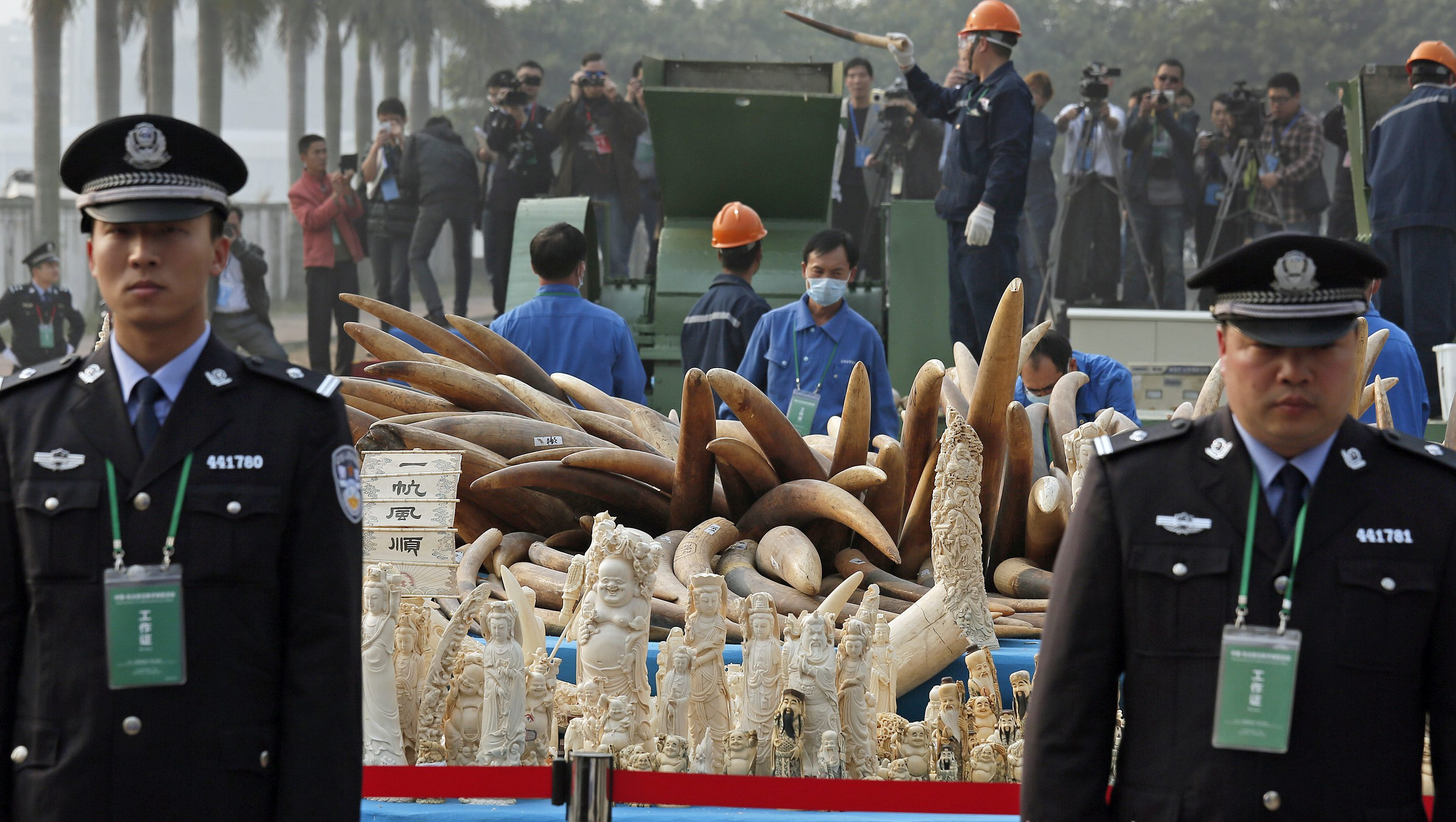 Customs officers stand guard in front of some illegal ivory during destruction in Dongguan, southern Guangdong province, China Monday, Jan. 6, 2014. China destroyed about 6 tons of illegal ivory from its stockpile on Monday, in an unprecedented move wildlife groups say shows growing concern about the black market trade by authorities in the world's biggest market for elephant tusks. (AP Photo/Vincent Yu)