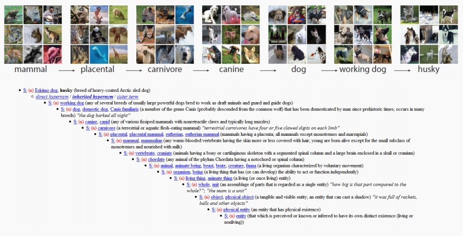ImageNet: the data that spawned the current AI boom — Quartz