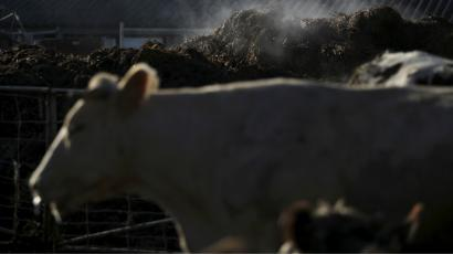 India-Beef-Cow-Cow slaughter-Lynching