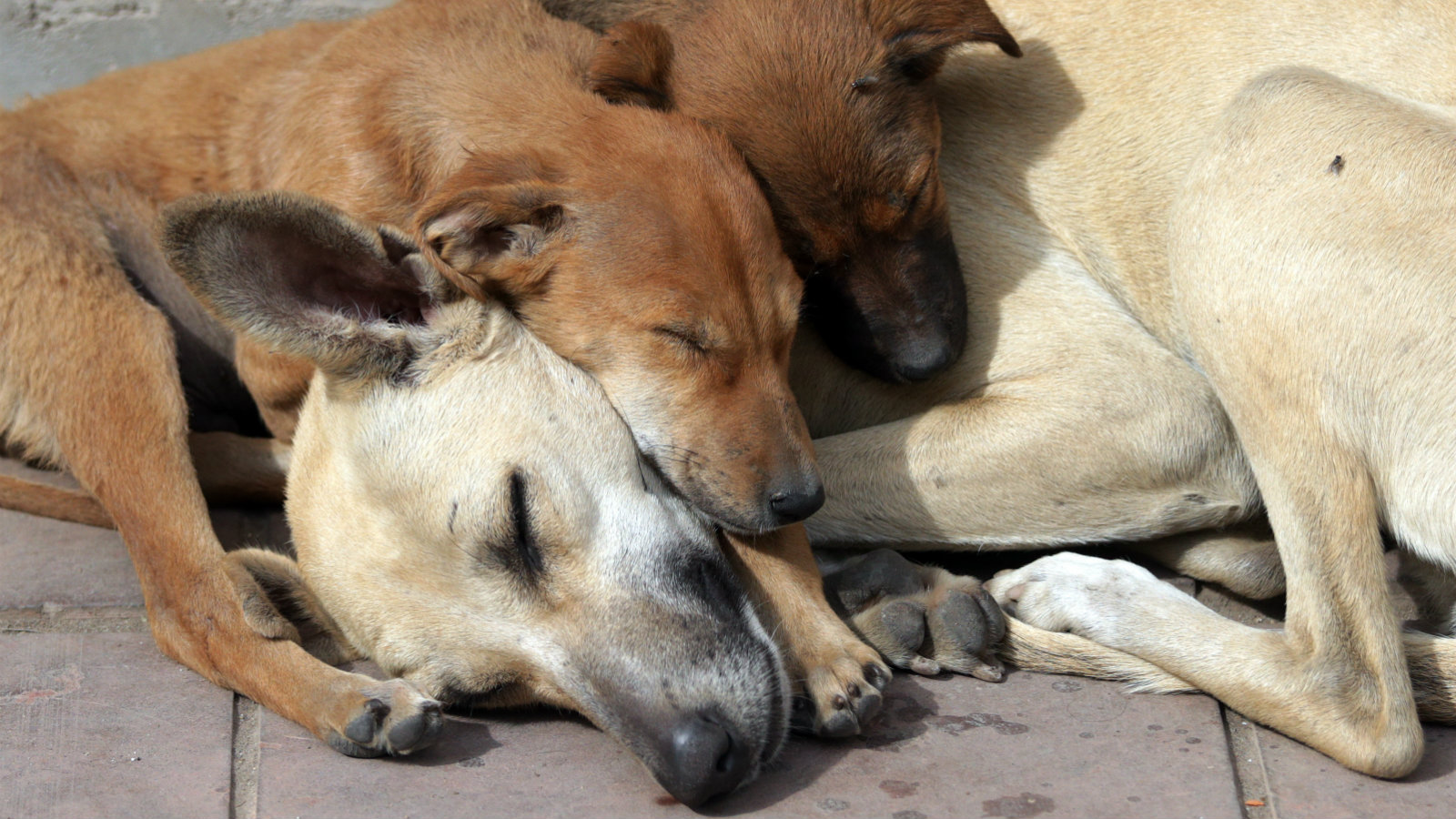 Puppies cuddle up with their mother as they doze in the sun a roadside in Amritsar, India, 28 February 2017.