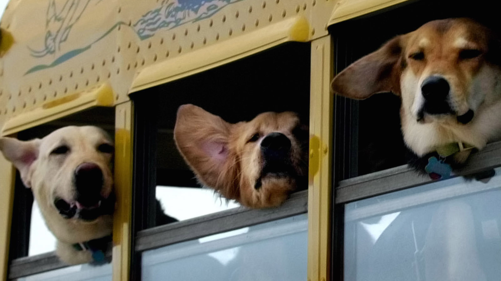ADVANCE FOR MON. JAN 22-- Ozzie, left, Joey, center, and Summer, right, look out of bus windows as they ride to the Totally Dog Training and Day Camp, Wednesday, Jan. 17, 2001, in Homestead, Fla. Owners pay $200 for a four-day training session before the dog is introduced to the group at the camp. After that, camp costs $35 a day, which includes transportation and snacks.